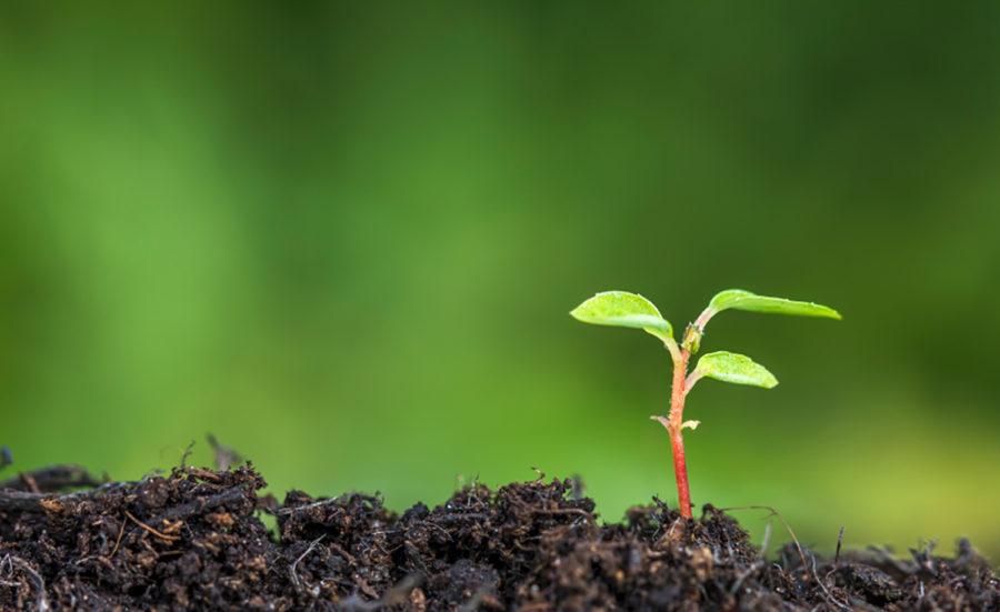 Startup que usa bactérias para fertilizar o solo recebe US$ 70 milhões de fundo de Bill Gates e Jeff Bezos